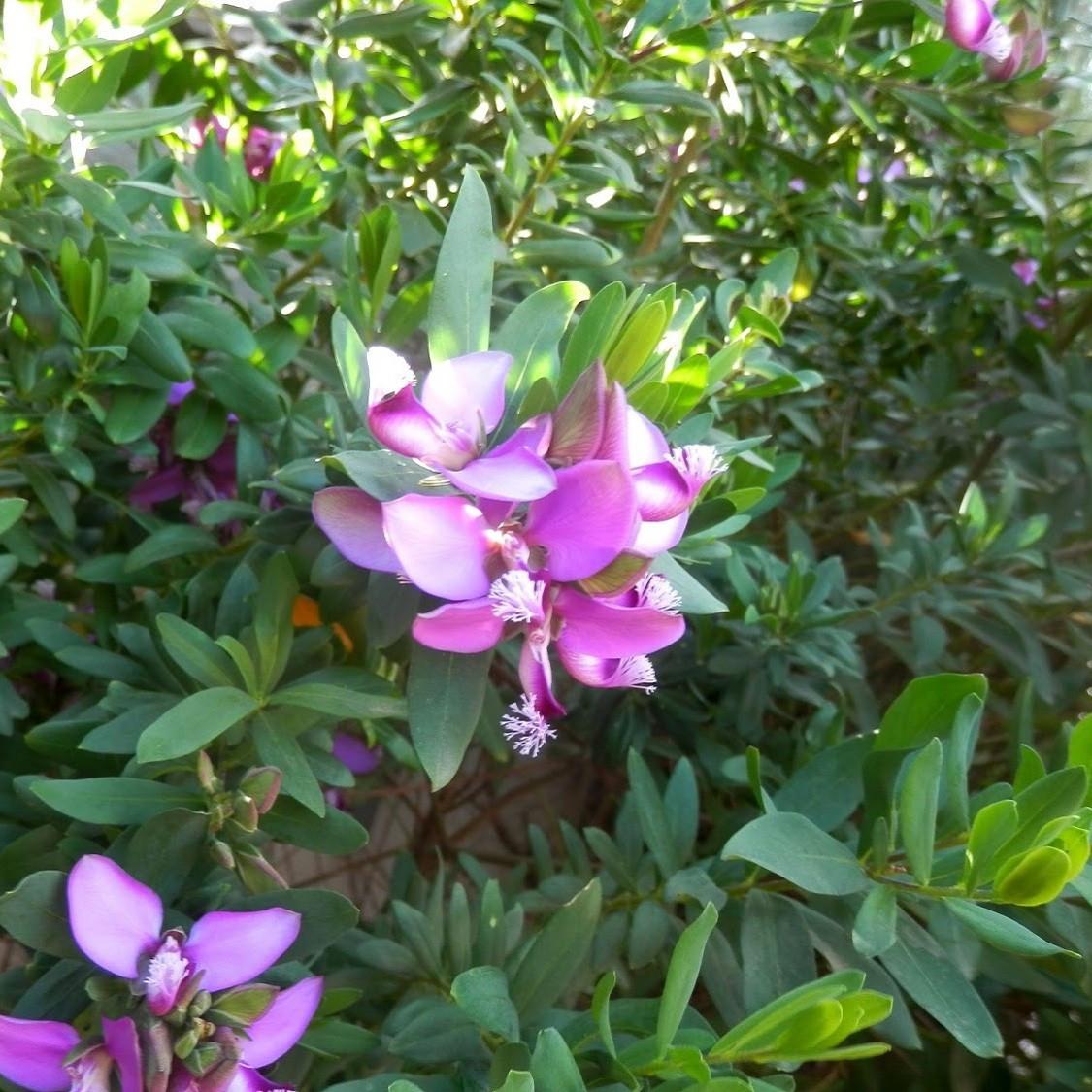 Flores de interior resistentes tulipanes with flores de - Planta exterior resistente ...