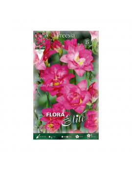 FREESIA DOBLE VIOLETA ELITE
