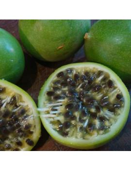 Passiflora Edulis Maracuja(Maracuyá)M-18