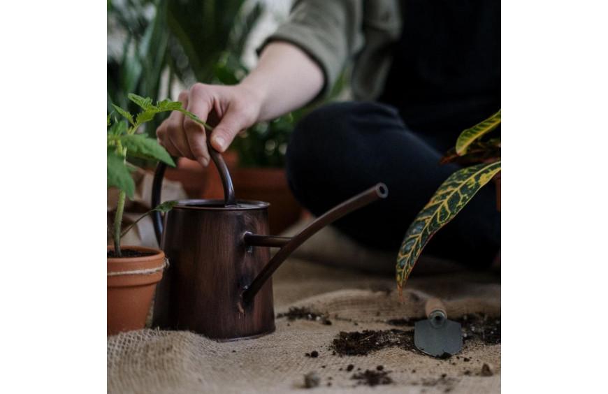 FACTORES CLAVE PARA EL CUIDADO DE PLANTAS EN VERANO