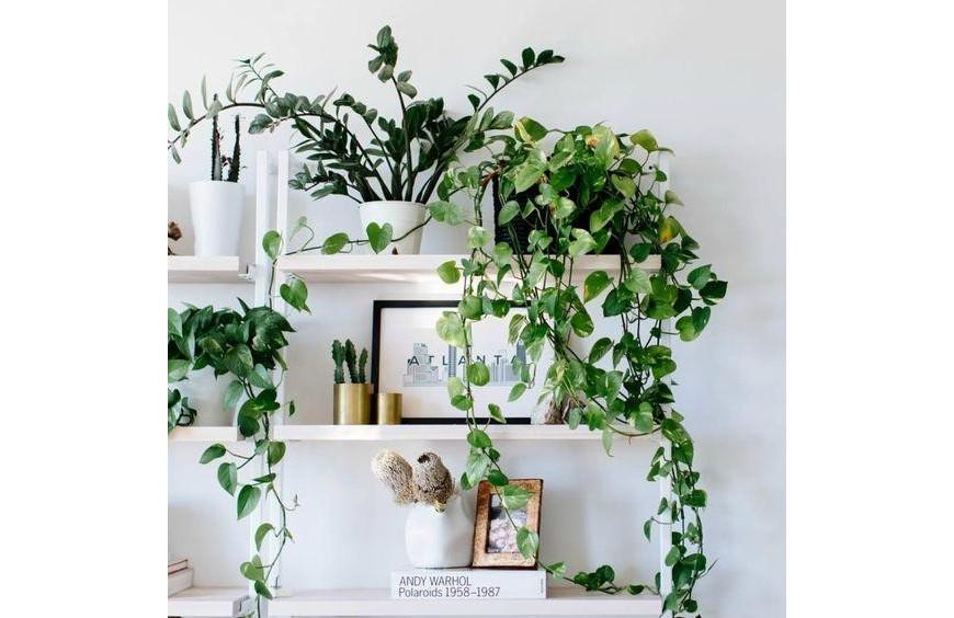 5 PLANTAS QUE NECESITAN POCA LUZ